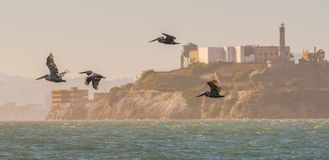 Free Pelicans Flying By Alcatraz Island Royalty Free Stock Photography - 108105827
