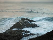 Pelicans Flying Over the Rocky Coastline. At Montana de Oro State Park, Los Osos, California Royalty Free Stock Photo