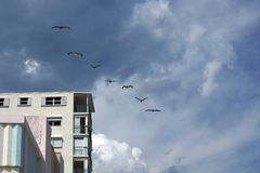 Pelicans flying over the waterfront promenade on Dania Beach Royalty Free Stock Images