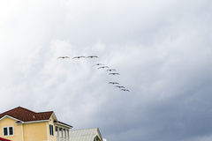 Pelicans flying in rain over a wooden beach villa Royalty Free Stock Images
