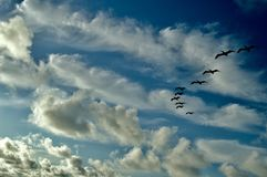 Pelicans Formation. A Pelicans Formation in the clouds Blue sky Royalty Free Stock Photography