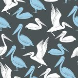 Pelicans on a gray background. Vector seamless pattern. Pelicans.  White and blue pelicans on a gray background. Vector seamless pattern Royalty Free Stock Photos