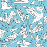 Pelicans, illustration, vector. Pelican pattern, texture design, vector illustration pelican seamless Stock Image