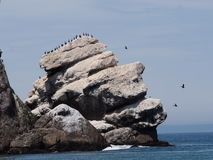 Pelicans on large rock Royalty Free Stock Photo