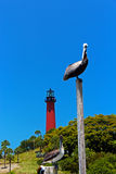Pelicans by the Lighthouse stock images