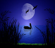 Pelicans in Moonlight. Pelicans silhouetted on a serene moonlit shore Royalty Free Stock Photography