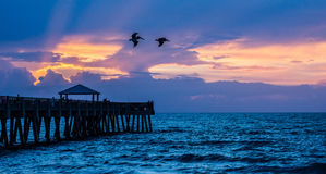 Pelicans Over the Fishing Pier Royalty Free Stock Image