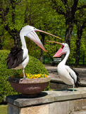 Pelicans in the park Royalty Free Stock Photos