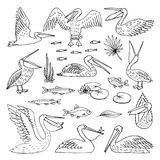 Pelicans pattern illustration, vector. Pelican pattern, texture design vector illustration. set Royalty Free Stock Image