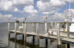 Pelicans perched on a dock Royalty Free Stock Image
