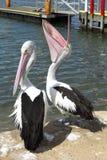 Pelicans on pier Stock Photo