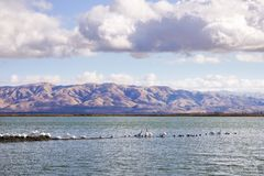 Pelicans rest on a levee in South San Francisco Bay on a cloudy day; on the background Mission Peak and Monument Peak, Sunnyvale. Bay trail, California stock images