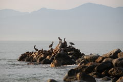 Pelicans on the rocks with mountains in the background Royalty Free Stock Image