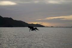 Pelicans saying goodbye at sunset stock photo
