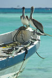Pelicans and seagulls. Fishing boat at the caribbean with pelican and seagull birds Royalty Free Stock Photos