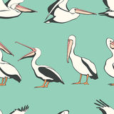 Pelicans seamless pattern. Vector seamless pattern with graceful pelicans.  Beautiful design elements, perfect for prints and patterns Stock Photography
