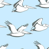 Pelicans seamless pattern. Vector seamless pattern with graceful flying pelicans.  Beautiful design elements, perfect for prints and patterns Stock Image