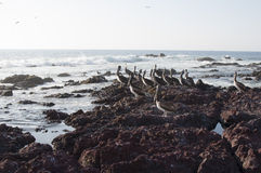 Pelicans at the seashore Royalty Free Stock Photos