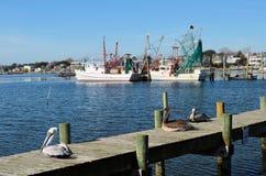 Pelicans Sitting on Pier Trawler Shrimp Boats royalty free stock photos