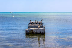 Pelicans standing on pier Royalty Free Stock Photos