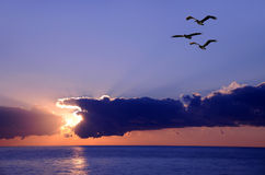 Pelicans at sunrise stock photo