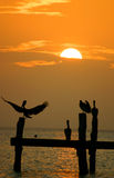 Pelicans at sunset. Pelicans relaxing during sunset, mexico royalty free stock photo