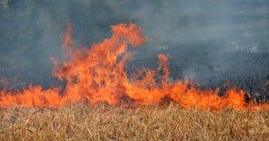 Peligro - el fuego desenfrenado del campo amenaza al fotógrafo Fotografía de archivo libre de regalías