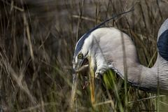 Peligros del monofilamento y de la fauna fotos de archivo libres de regalías