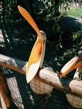 Pelikaan, aard mooie reizen prachtig, pelikanen royalty-vrije stock foto