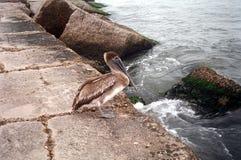 Pelikaan op Pier Royalty-vrije Stock Foto's