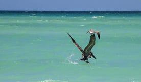 Pelikaan visserij Stock Fotografie