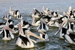 Pelikan auf der Sonne Stockfoto