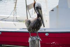 Pelikan auf Posten stockfotos