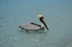 Pelikan in dem Meer Lizenzfreie Stockfotos