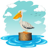 Pelikan, der auf Klotz steht Lizenzfreie Stockfotos