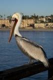 Pelikan, der auf Piergeländer sitzt Stockfotos