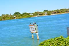 Pelikan, der auf Zeichen steht Stockfoto
