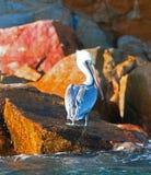Pelikan, der in der Sonne auf Pelikan-Felsen in Cabo San Lucas Baja Mexiko glänzt Lizenzfreie Stockbilder