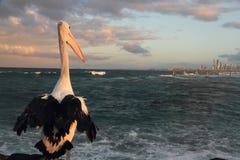 Pelikan, der die Stadt betrachtet Lizenzfreie Stockfotografie
