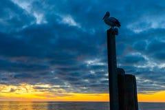 Pelikan an Glenelg-Strand Stockbild