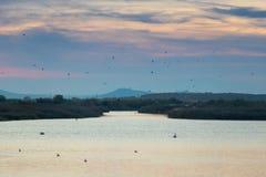 Pelikan, häger, seagulls, änder och andra fåglar som flyger över Vistonida sjön i Rodopi, Grekland royaltyfri foto