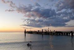 Pelikan- och bryggakontur på den Coogee strandsolnedgången, västra Australien Royaltyfri Foto