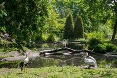 Pelikan och stork Arkivfoto