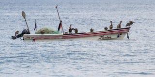 Pelikan på ett fartyg Royaltyfria Foton