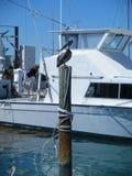 Pelikan på stolpen i marina Arkivbilder