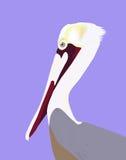 Pelikan-Portrait Lizenzfreie Stockfotos