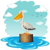 Pelikan pozycja na beli Zdjęcia Royalty Free