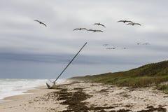 Pelikan som flyger över en grundad segelbåt - Florida Royaltyfri Foto