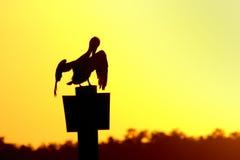 Pelikan am Sonnenuntergang lizenzfreies stockfoto