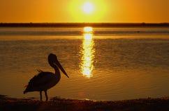 Pelikan am Sonnenuntergang Lizenzfreie Stockfotos